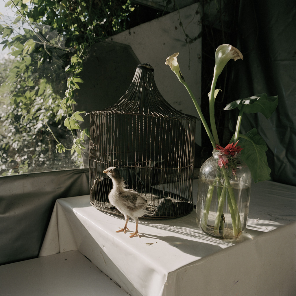 Alec Soth. From the project