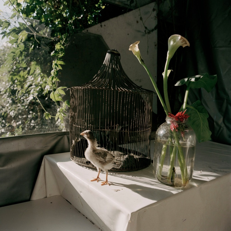 "Alec Soth. From the project ""Dog Days, Bogotá"". Source: alecsoth.com"